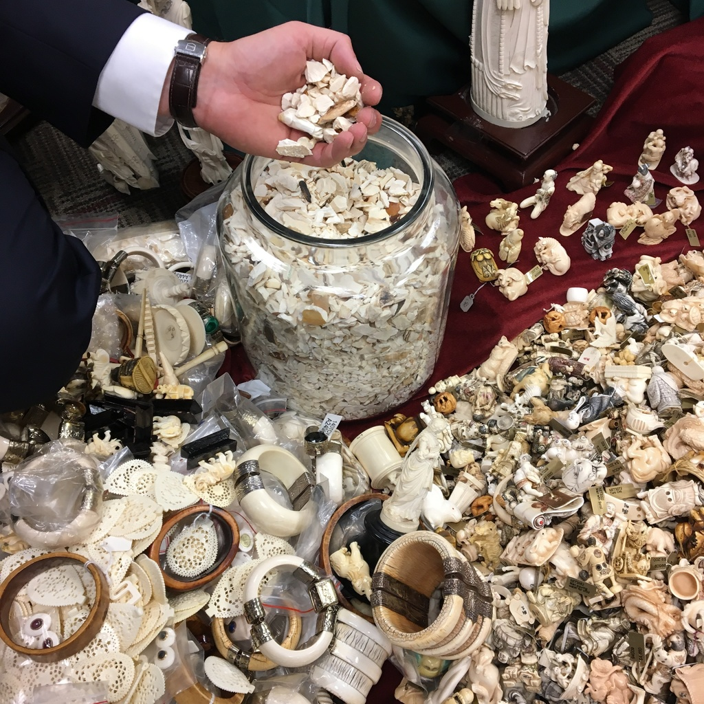 This photo taken July 27, 2017, in Albany, N.Y., shows carved ivory tusks, some of the artifacts to be crushed Thursday, Aug. 3 in Central Park to hig...