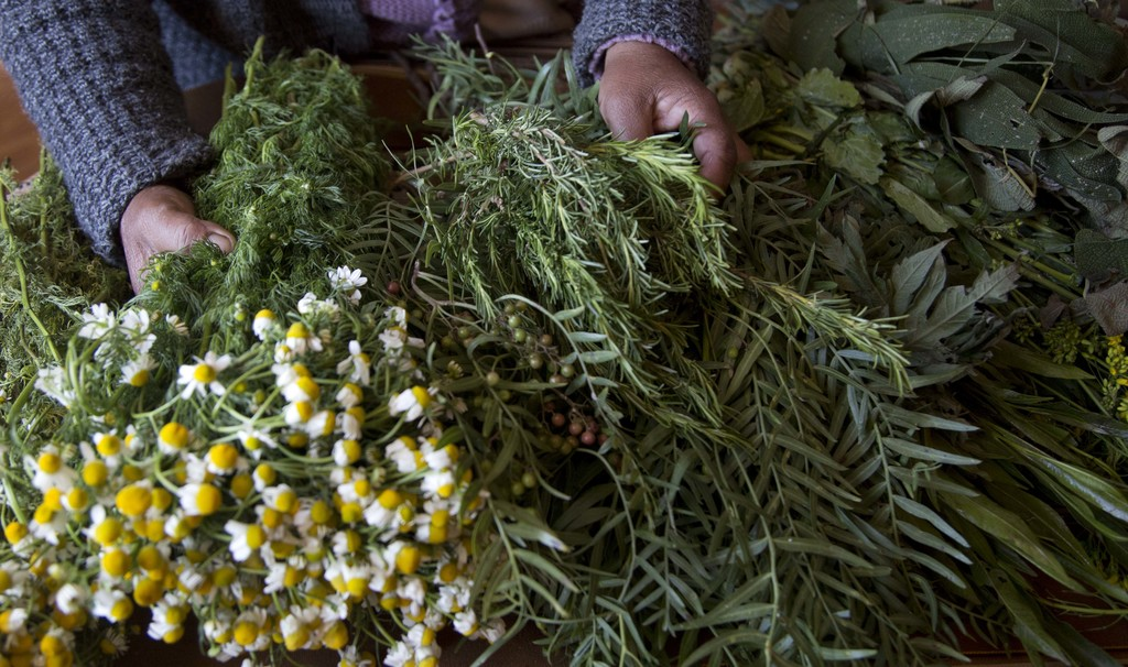 In this July 20, 2017 photo, midwife Ana Choque selects medicinal herbs to take to one of her pregnant patients for prenatal care in El Alto, Bolivia....