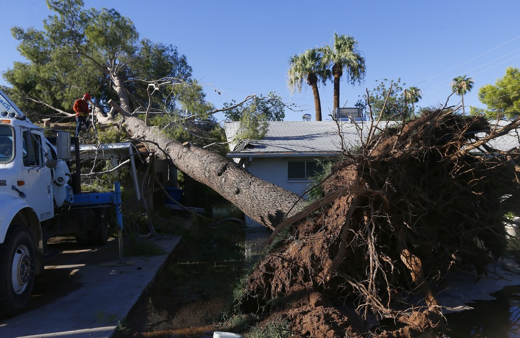 A tree removal worker cuts up a downed tree after it clipped one home and crushed part of another Friday, Aug 4, 2017, in Phoenix, after violent storm...