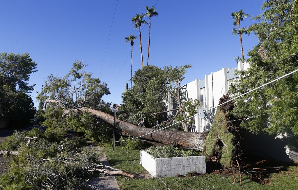 A downed tree just missed an apartment building but took down power lines Friday, Aug 4, 2017, in Phoenix, after violent storms pushed through the met...