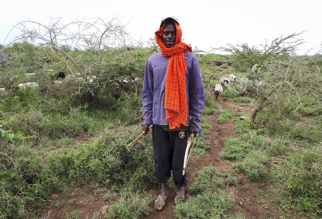 In this photo taken Wednesday, July 26, 2017, an unauthorized herder armed with a bow and arrow grazes his sheep and goats on the Kifuku Farm property...
