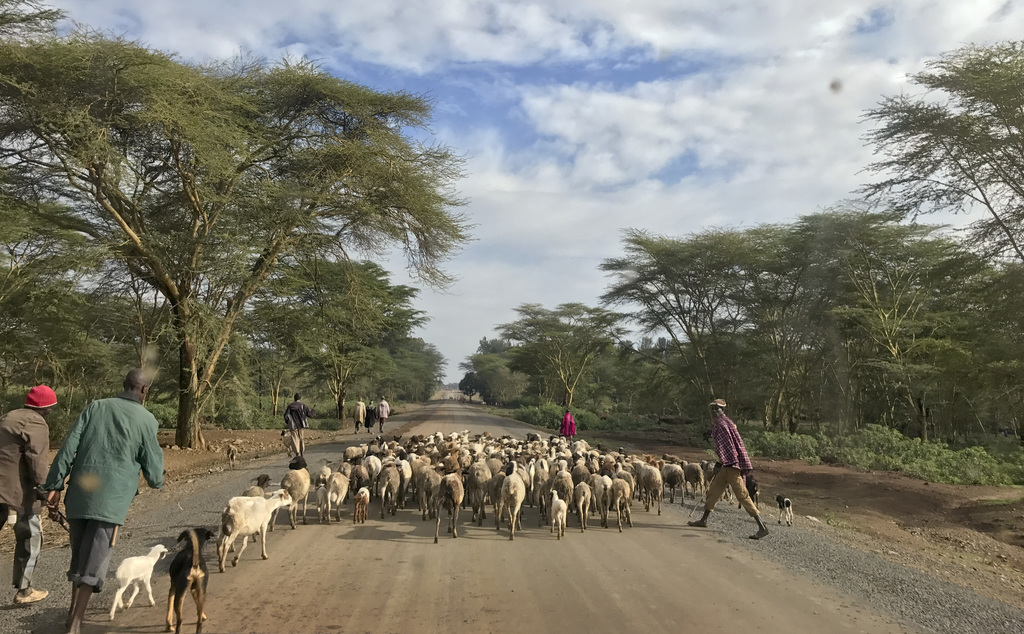 In this photo taken Thursday, July 27, 2017, herdsmen herd their sheep and goats along a road in Laikipia, Kenya. Farms and houses here have been unde...