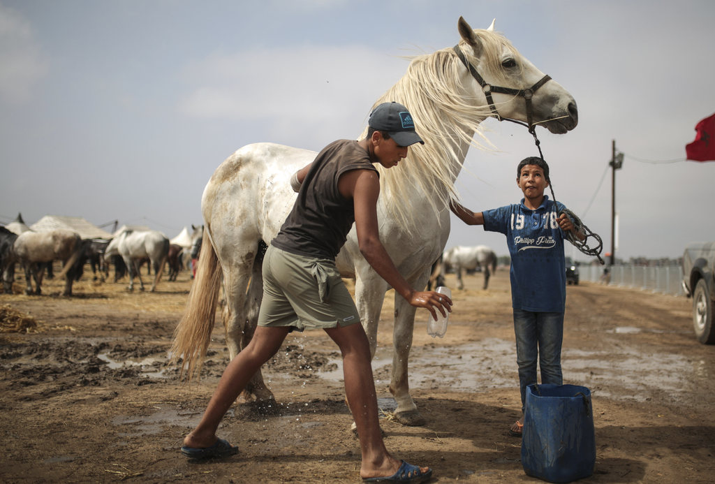 In this Thursday, Aug. 17, 2017 photo, kids wash their horses as they are prepared for Tabourida, a traditional horse riding show also known as Fantas...