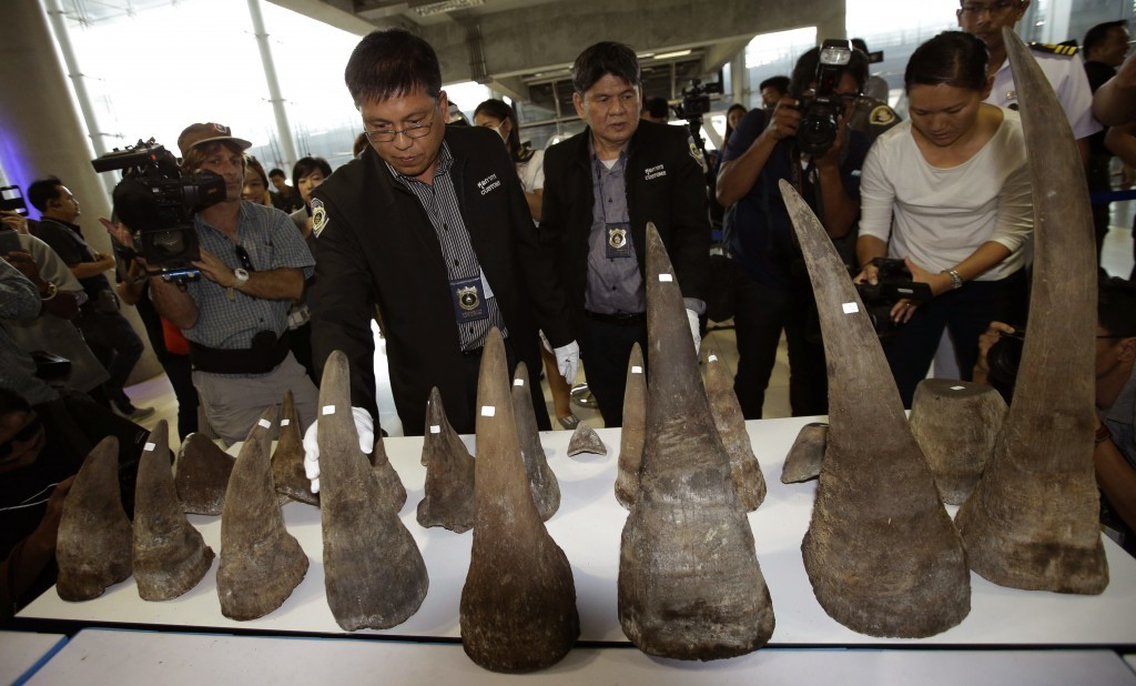 FILE - In this March 14, 2017, file photo, customs officers display seized rhino horns during a press conference at the  Suvarnabhumi airport, Bangkok...