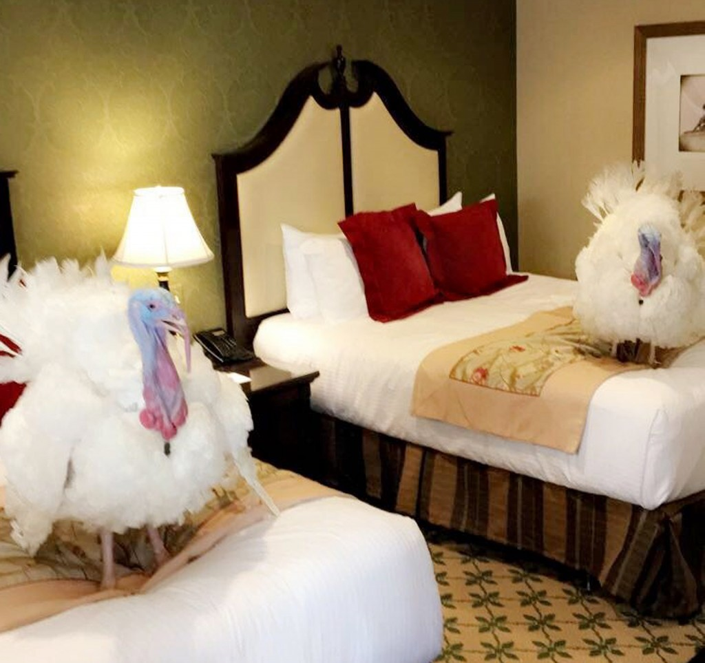 White House turkeys gear up for Tuesday's pardoning cermony