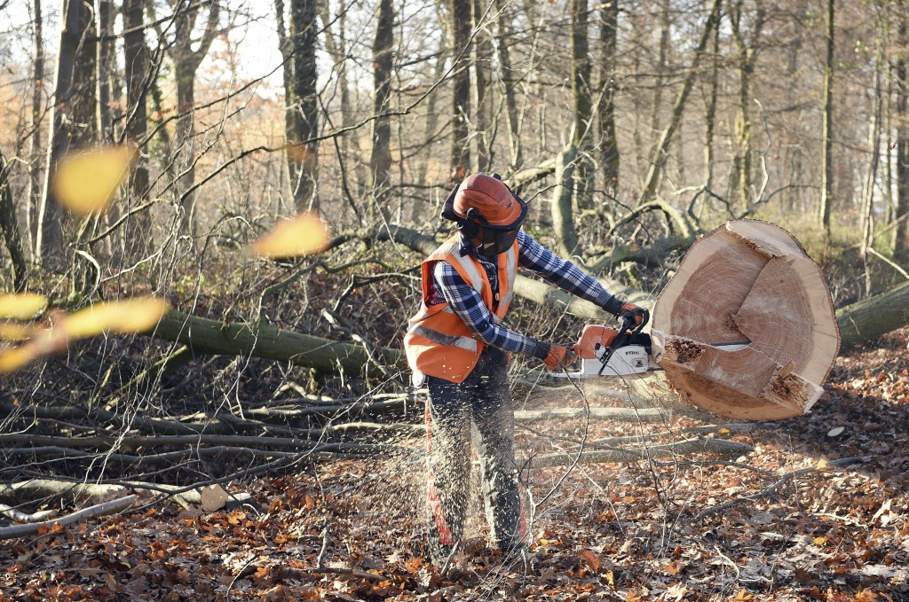 FILE - In this Nov. 28, 2016 file photo a lumberjack saws a tree at the Hambach forest near Kerpen, Germany.  Cologne's administrative court ruled Fri