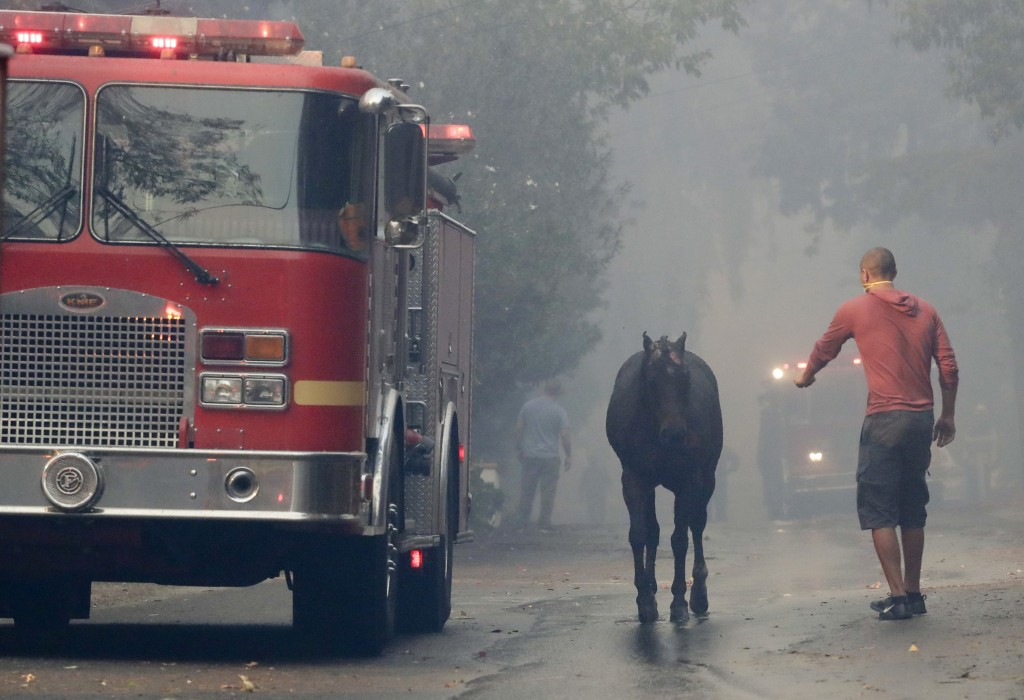A man tries to get a hand on a horse that got loose during wildfire in the Lake View Terrace area of Los Angeles, Tuesday, Dec. 5, 2017. (AP Photo/Chr
