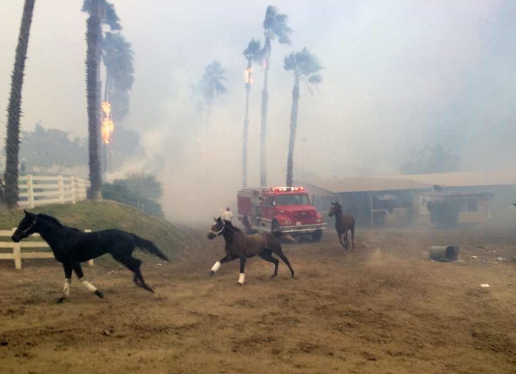 Terrified horses gallop from San Luis Rey Downs as the Lilac Fire sweeps through the horse-training facility, Thursday, Dec. 7, 2017 in San Diego. (Pa