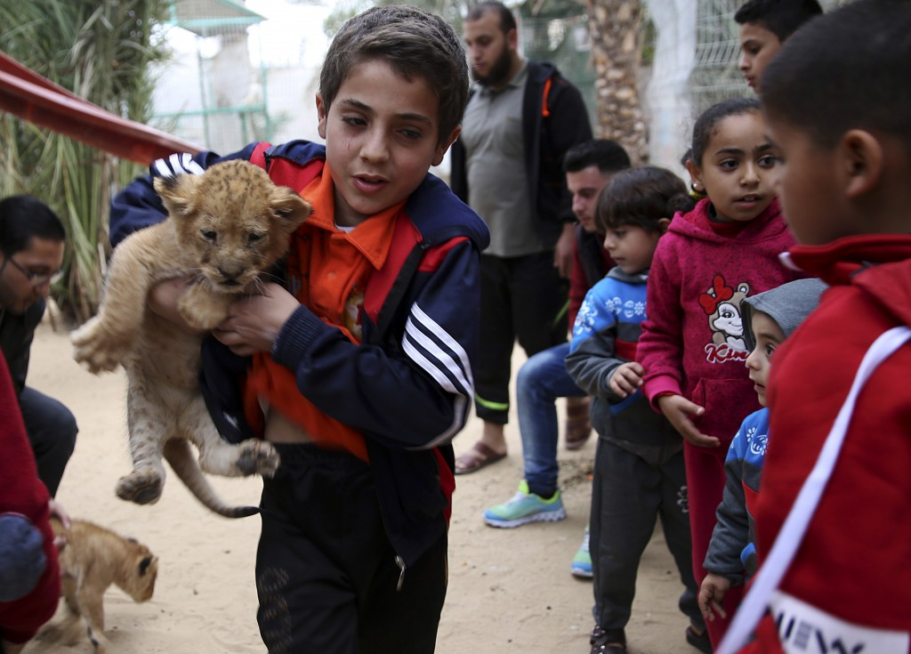 A Palestinian youth holds a two-month-old lion cubs while children watch at the zoo in Rafah, Gaza Strip, Friday, Dec. 22, 2017. A Palestinian zoo own...