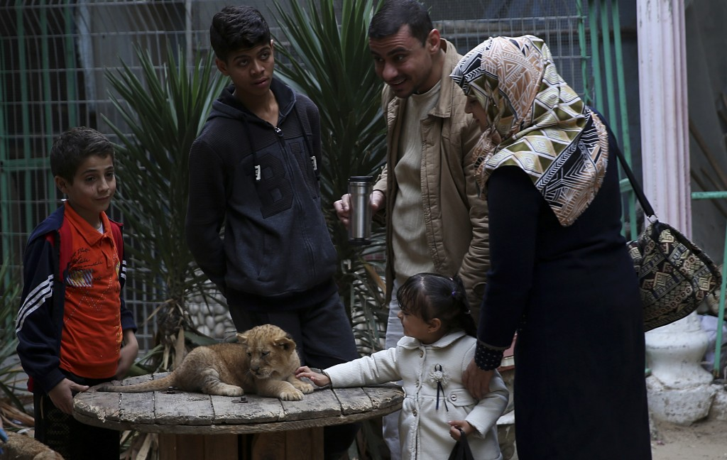 A Palestinian family looks at a two-month-old lion cub, at the zoo in Rafah, Gaza Strip, Friday, Dec. 22, 2017. A Palestinian zoo owner has put three ...