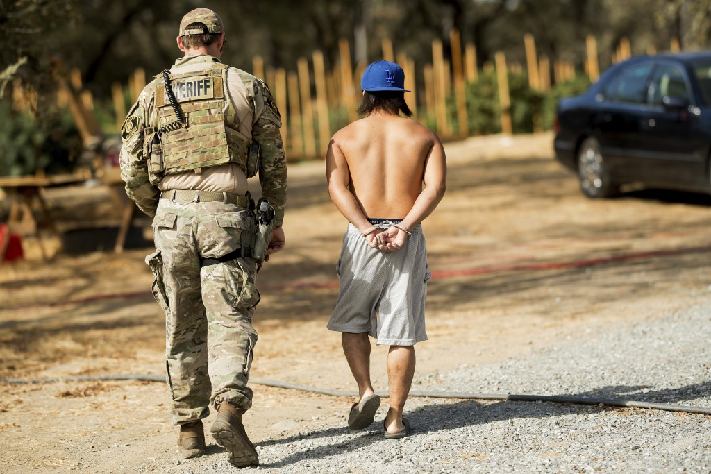 File - In this Sept. 29, 2017, file photo, a sheriff's deputy arrests a man for allegedly cultivating marijuana in unincorporated Calaveras County, Ca...