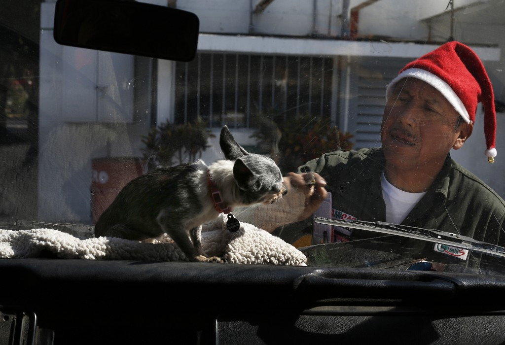 """In this Dec. 24, 2017 photo, a gas station attendant wearing a Christmas hat plays with a chihuahua dog named """"Azucar,"""" or Sugar, that sits on the das..."""