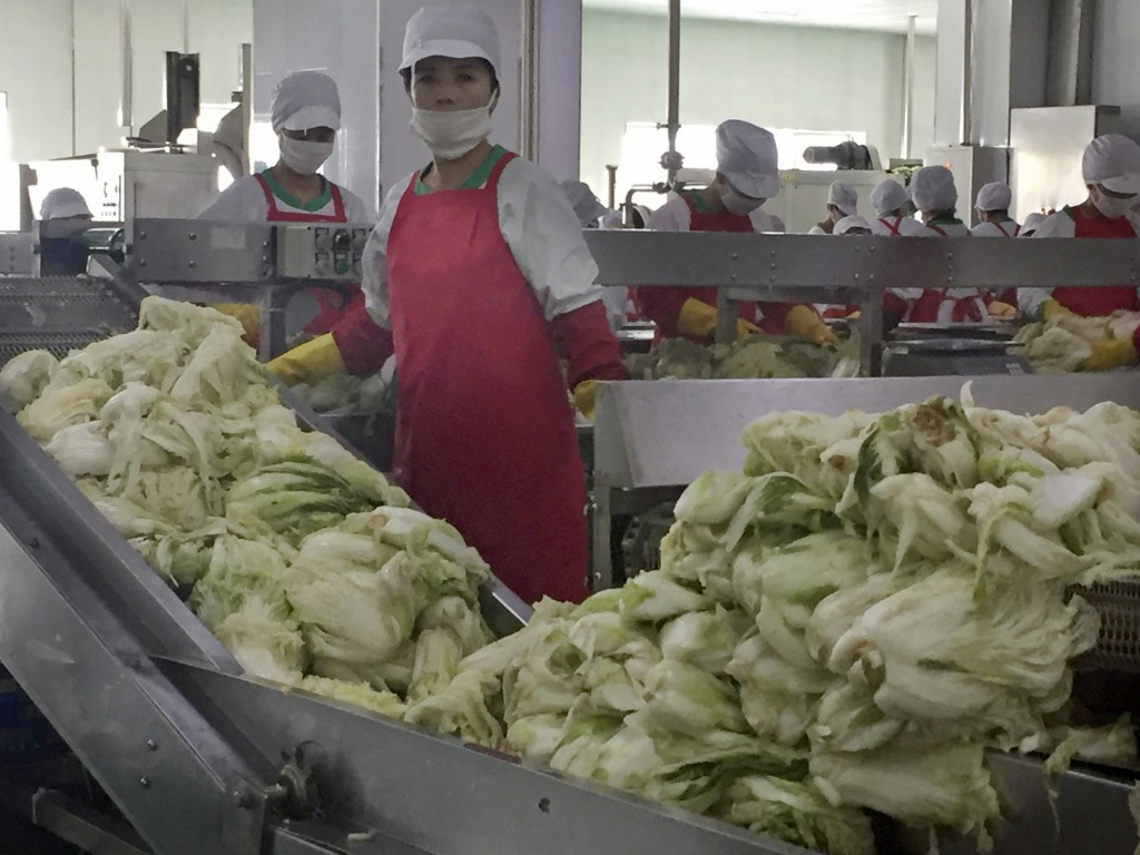 In this Dec. 20, 2017, photo, workers prepare kimchi on the production line at the Ryugyong Kimchi Factory on the outskirts of Pyongyang, North Korea....