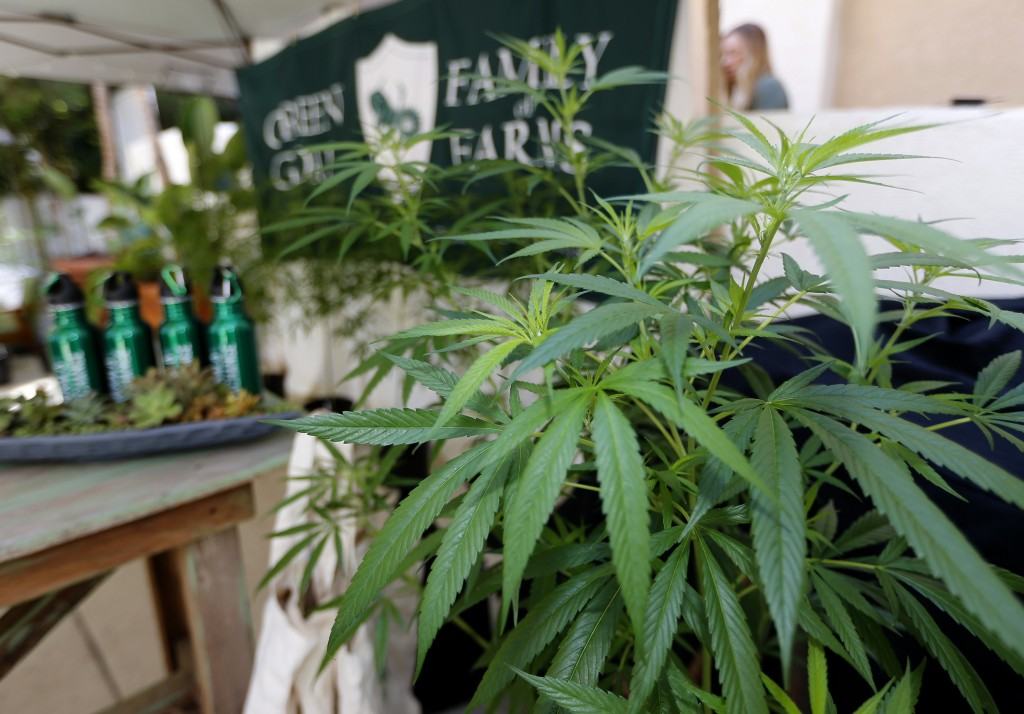 """FILE - In this Sept. 28, 2017, file photo, marijuana plants are displayed at the Green Goat Family Farms stand at """"The State of Cannabis,"""" a Californi..."""