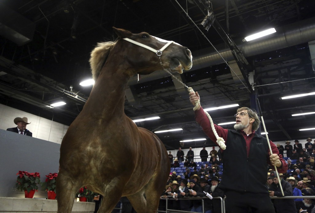 An auctioneer, left, solicits bids as a draft horse is walked in front of prospective buyers at the Pennsylvania Farm Show Complex Wednesday Jan.17, 2
