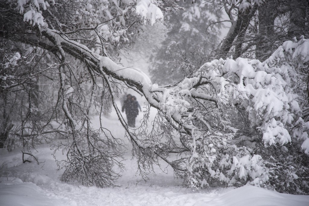 People walk next to a fallen branch due to heavy snowfall on a tree in the Botanical Garden in Moscow, Russia, Sunday, Feb. 4, 2018. Heavy snow has st