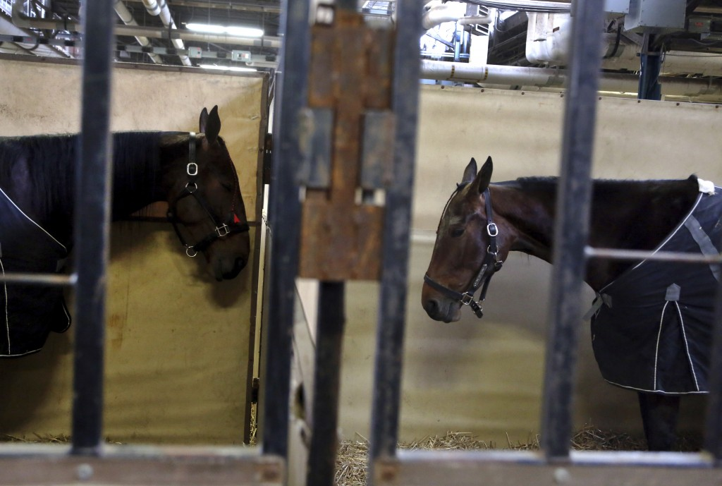 Harness horses Muscle Man, left, and My Way The Highway, right, of Dundee, Ohio, stand in their stalls during a horse auction at the Pennsylvania Farm