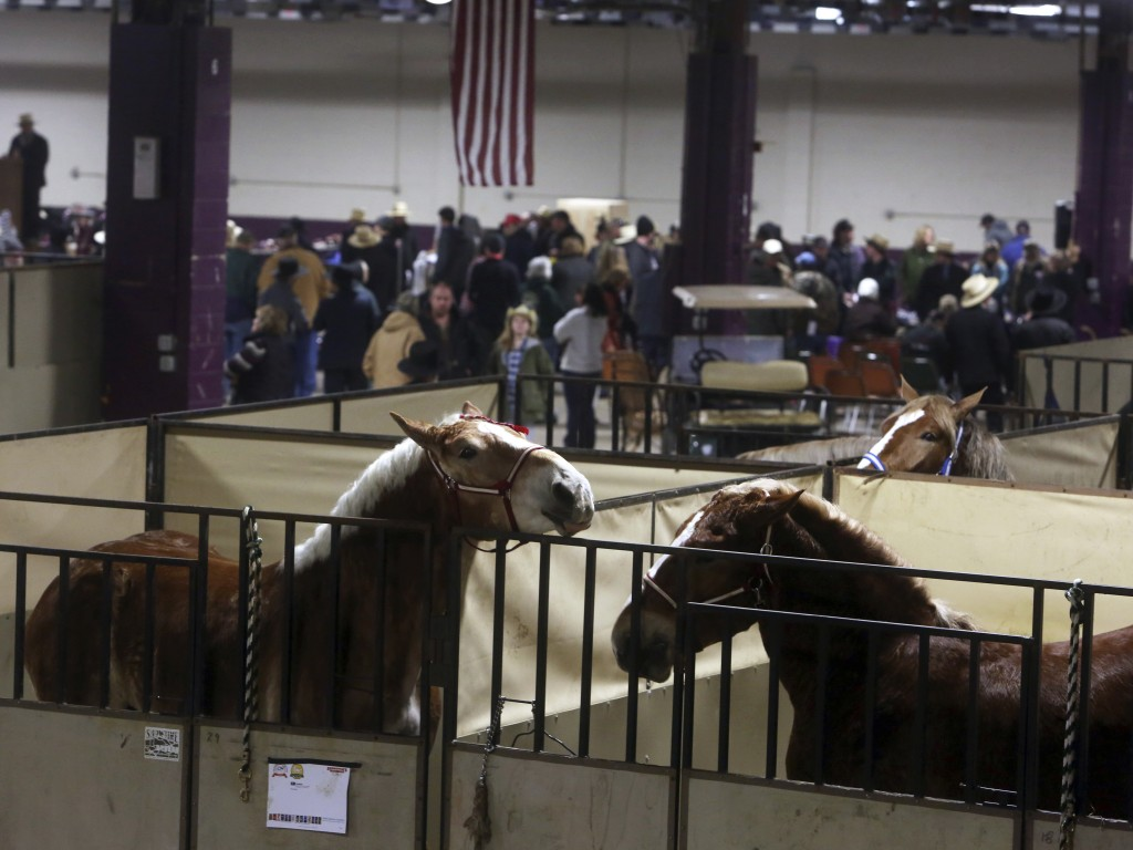 Horses occupy their stalls as people gather for a Tack sale at the Pennsylvania Farm Show Complex Tuesday Jan.16, 2018 in Harrisburg, Pa. Amish from a