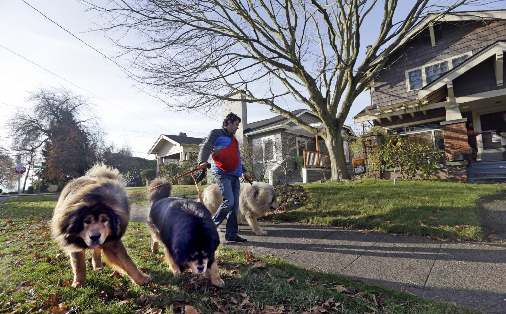 In this Dec. 13, 2017, photo, a man walks dogs though a single-family neighborhood dotted with bungalows and stately Craftsman homes, where a proposal...