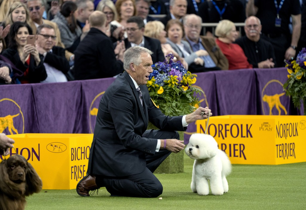 Handler Bill McFadden reacts as Flynn, a bichon frise, is named best in show at the 142nd Westminster Kennel Club Dog Show, Tuesday, Feb. 13, 2018, at