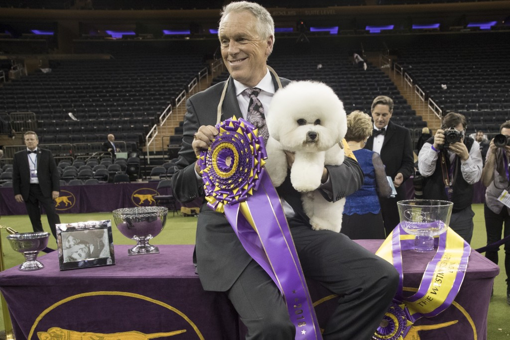 Handler Bill McFadden poses for photos with Flynn, a bichon frise, after Flynn won best in show during the 142nd Westminster Kennel Club Dog Show, Tue