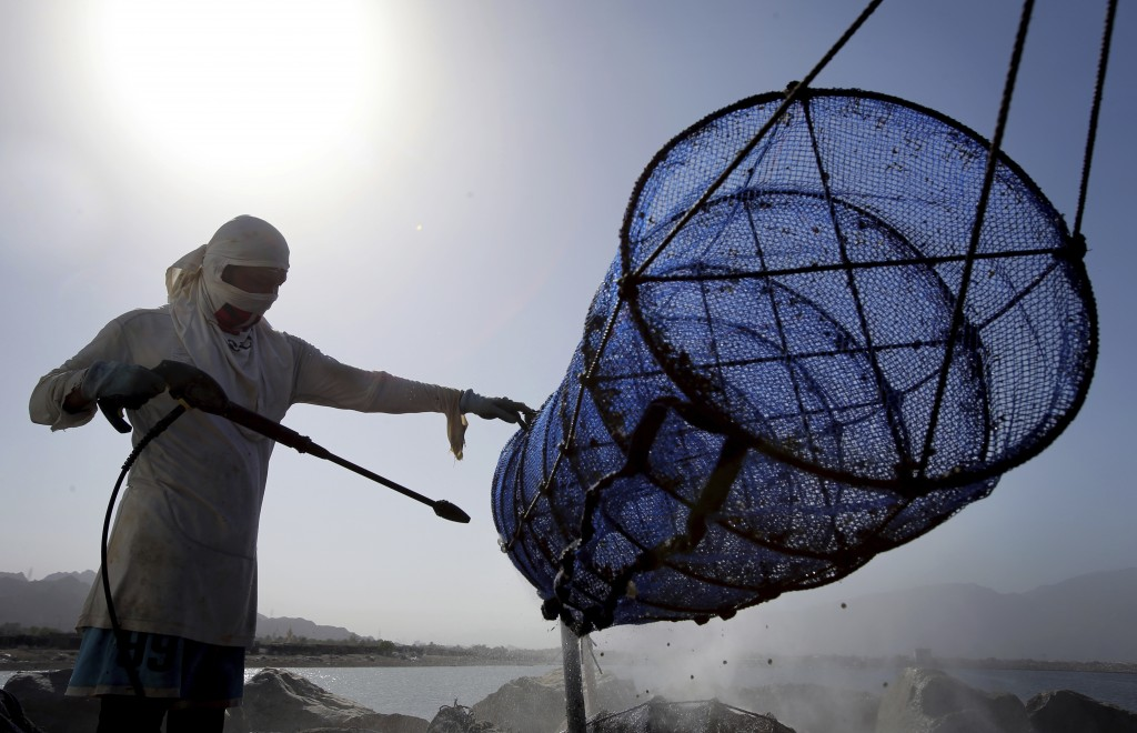 In this Jan. 23, 2018 photo, an employee of the Dibba Bay Oyster Farm cleans a lantern net at the company's harvesting and processing facilities, in D