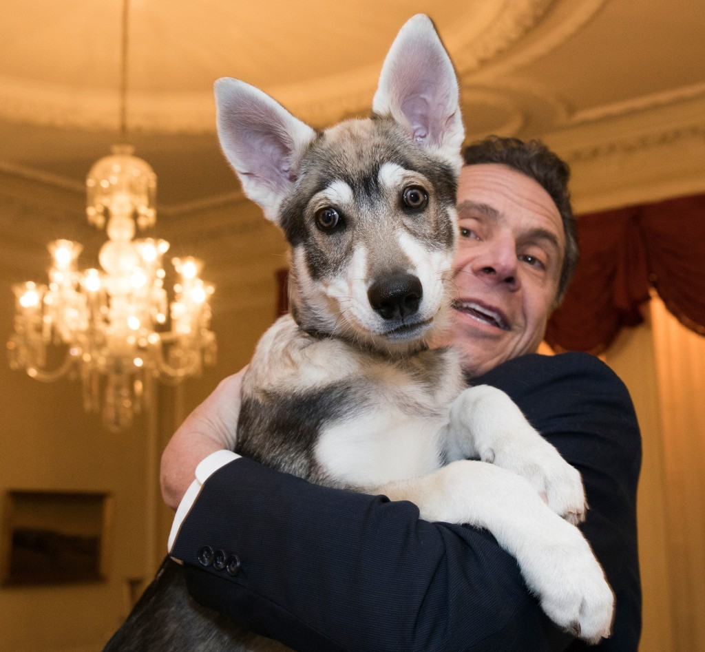 "In this Feb. 12, 2018 photo provided by the Office of Gov. Andrew Cuomo, the governor holds his new dog ""Captain"" during a conference of mayors in Alb"