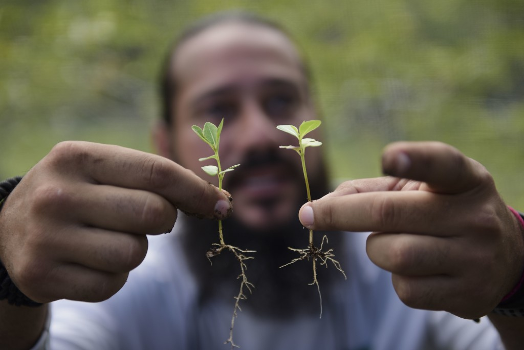 In this March 2, 2018 photo, Manuel Sepulveda, a nursery management coordinator with Para la Naturaleza, a non-profit organization, holds a couple of