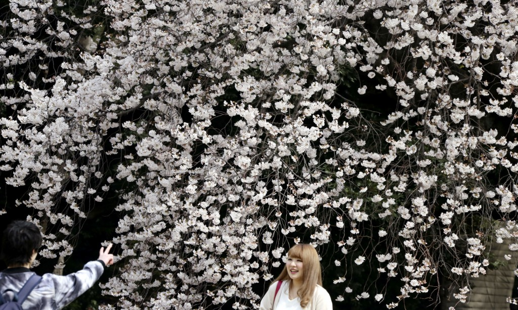 In this Monday, March 26, 2018, file photo, visitors gather for flower viewing at Shinjuku Gyoen national garden in Tokyo, as cherry blossom flowers a...