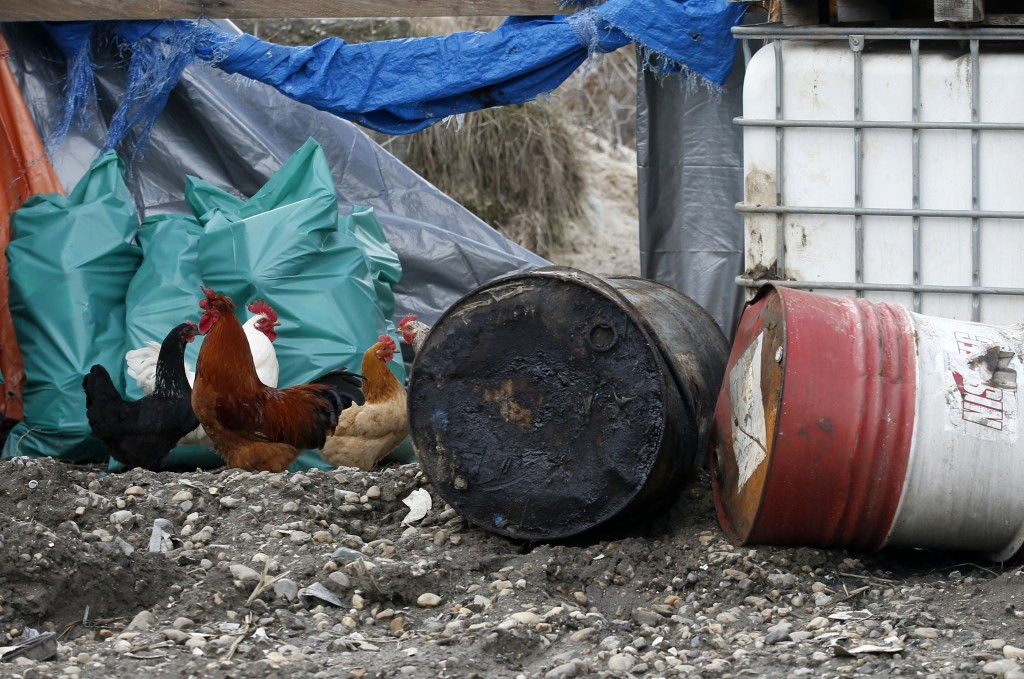 In this photo taken Monday, March 12, 2018, chicken walk on a farm old rusty barrels and plastic containers full of liquid were discovered,  in the no...