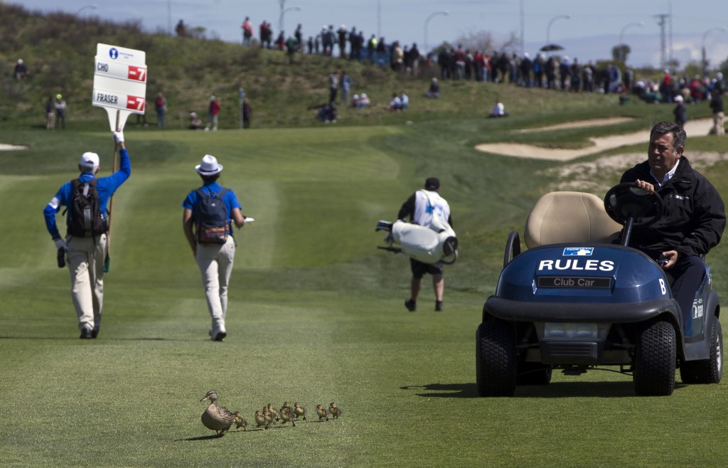 An official in a golf cart ushers a family of ducks off the course during the Spanish Open Golf tournament in Madrid, Spain, Saturday, April 14, 2018.