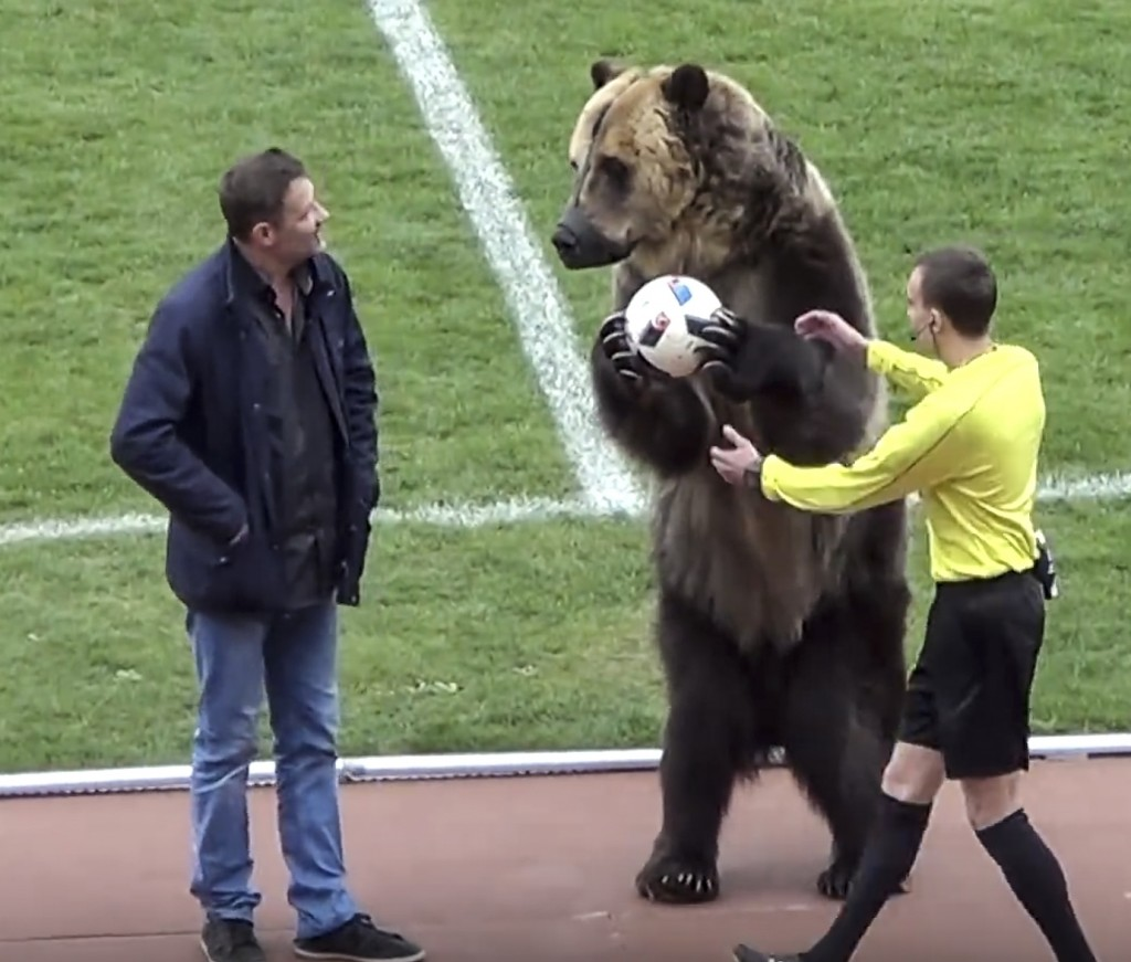 In this image taken from video provided by FC Angusht Nazran a bear performs before a Russian Second League soccer match between Angusht Nazran and Ma