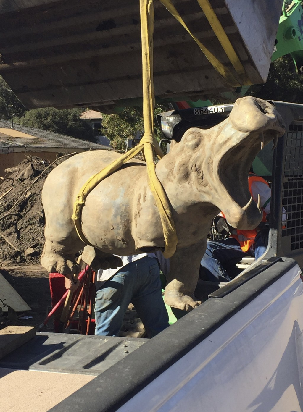 In this Feb. 17, 2018, photo provided by Amanda Hockham, a 400-pound bronze hippo is recovered from the mud in Montecito, Calif. The hippo, which had