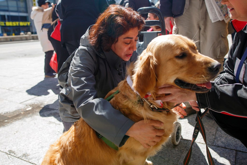 Marian Iravani hugs Buddy the golden retriever therapy dog from St. John's Ambulance at Mel Lastman Square in Toronto on Thursday, April 26, 2018 as t...
