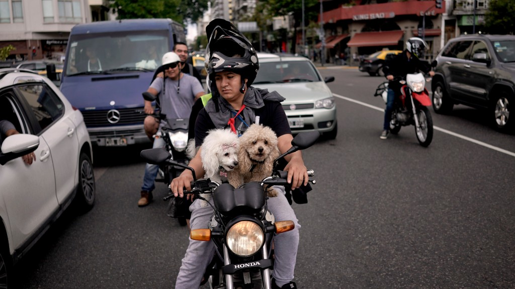 In this April 21, 2018, a motorist sits at a traffic light with two toy poodles on his motorcycle in Buenos Aires, Argentina. (AP Photo/Victor R. Caiv...