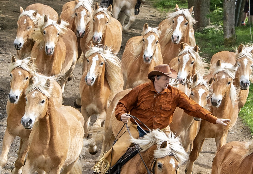 A rider gesture to the Haflinger horses during this years's first turn-out to grass at Europe's largest Haflinger stud-farm in Meura, Germany, Sunday,...