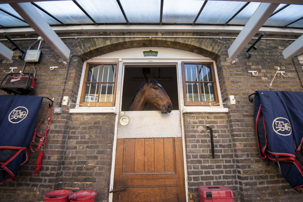 A Cleveland Bay horse in the Royal Mews at Buckingham Palace in London, during preparations ahead of the wedding of Britain's Prince Harry and Meghan ...
