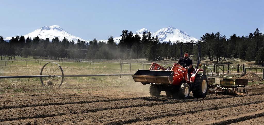 In this April 23, 2018 photo, Trevor Eubanks, plant manager for Big Top Farms, readies a field for another hemp crop near Sisters, Ore. A glut of lega...