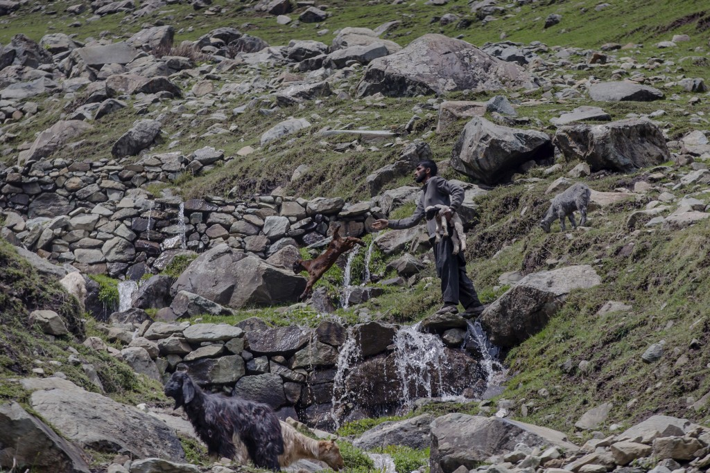In this May 9, 2018, photo, a Kashmiri nomadic Bakarwal man carries a lamb as he tosses a baby goat to help them cross a waterfall near Dubgan, 70 kil
