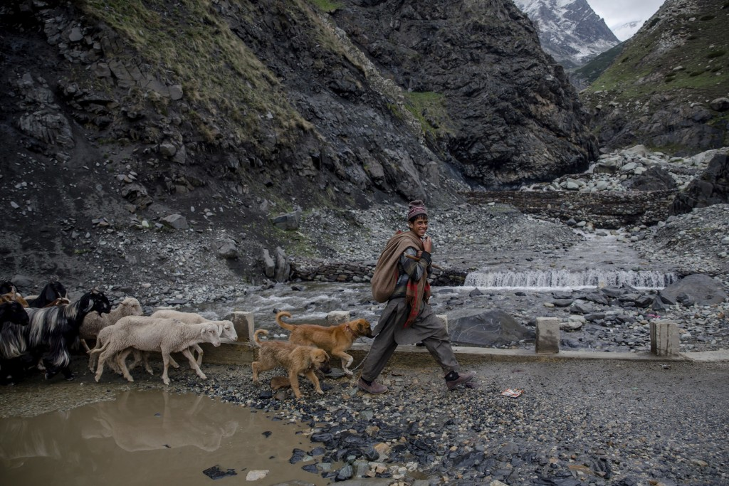 In this May 9, 2018, photo, a Kashmiri nomadic Bakarwal boy leads the heard of sheep and goats near Dubgan, 70 kilometers (43 miles) south of Srinagar