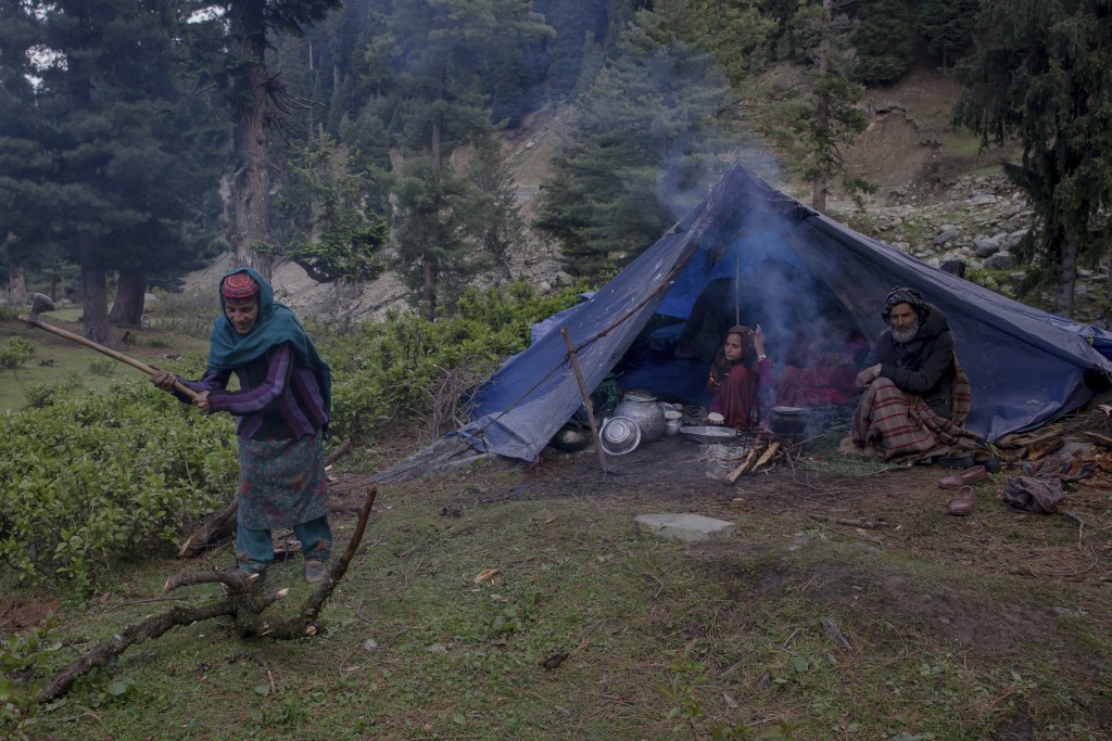In this May 9, 2018, photo, Rashem Jan, a Kashmiri nomadic Bakarwal woman cuts a tree trunk for cooking food outside her tent at a temporary camp in D