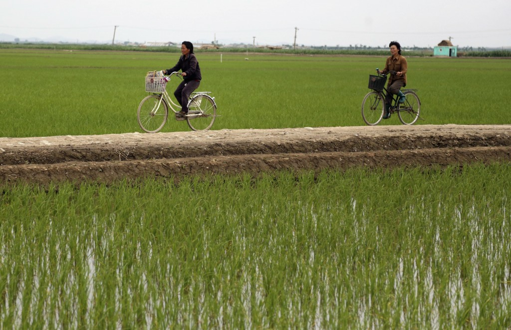 Cyclists ride along rice fields in Sariwon, North Korea, Wednesday, June 13, 2018. Away from the political developments that have rocketed their count