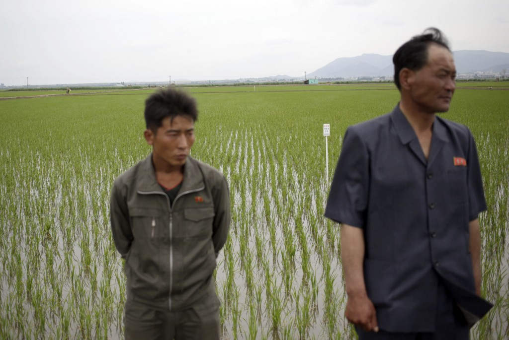 Chief engineer at the Migokri Cooperative Farm Kim Song Ryong, right, stands with a worker at a rice field in Sariwon, North Korea, Wednesday, June 13