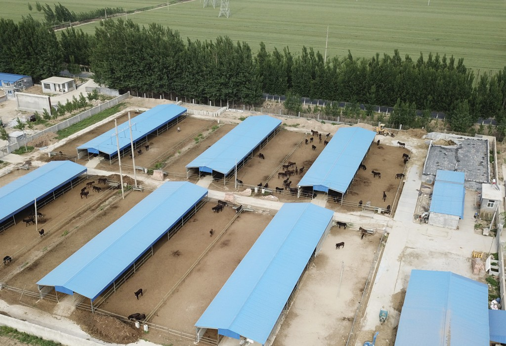 This May 14, 2018, drone photo shows a donkey farm run by one of the many local subcontractors supplying the world's largest donkey skin gel producer