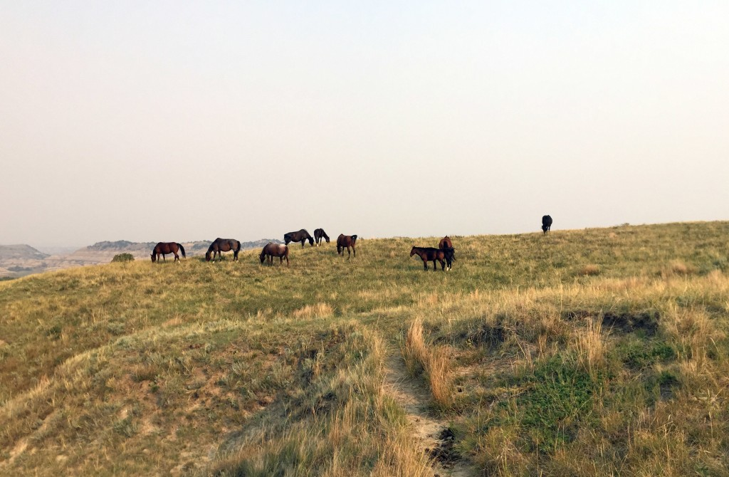 This Sept. 3, 2017 photo shows a herd of feral horses grazing on a hill at Theodore Roosevelt National Park in Medora, N.D. The park's south unit has ...