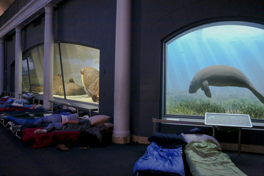 Visitors sleep under the light of dioramas during the adult-only sleepover at the American Museum of Natural History on Friday, June 22, 2018, in New ...