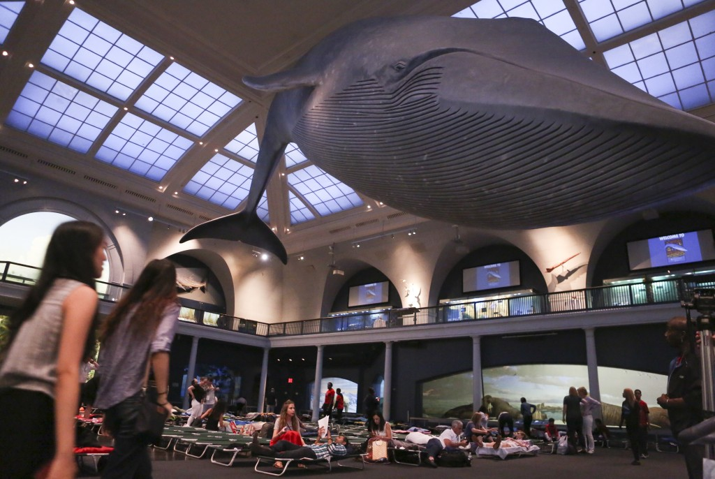 Visitors at the American Museum of Natural History prepare to spend the night under the blue whale exhibit in the Milstein Hall of Ocean Life during t...