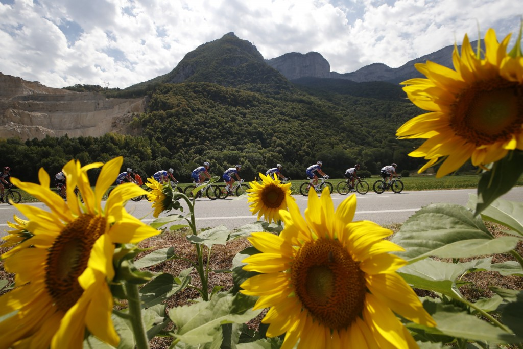 The pack passes a field with sunflowers during the thirteenth stage of the Tour de France cycling race over 169.5 kilometers (105.3 miles) with start