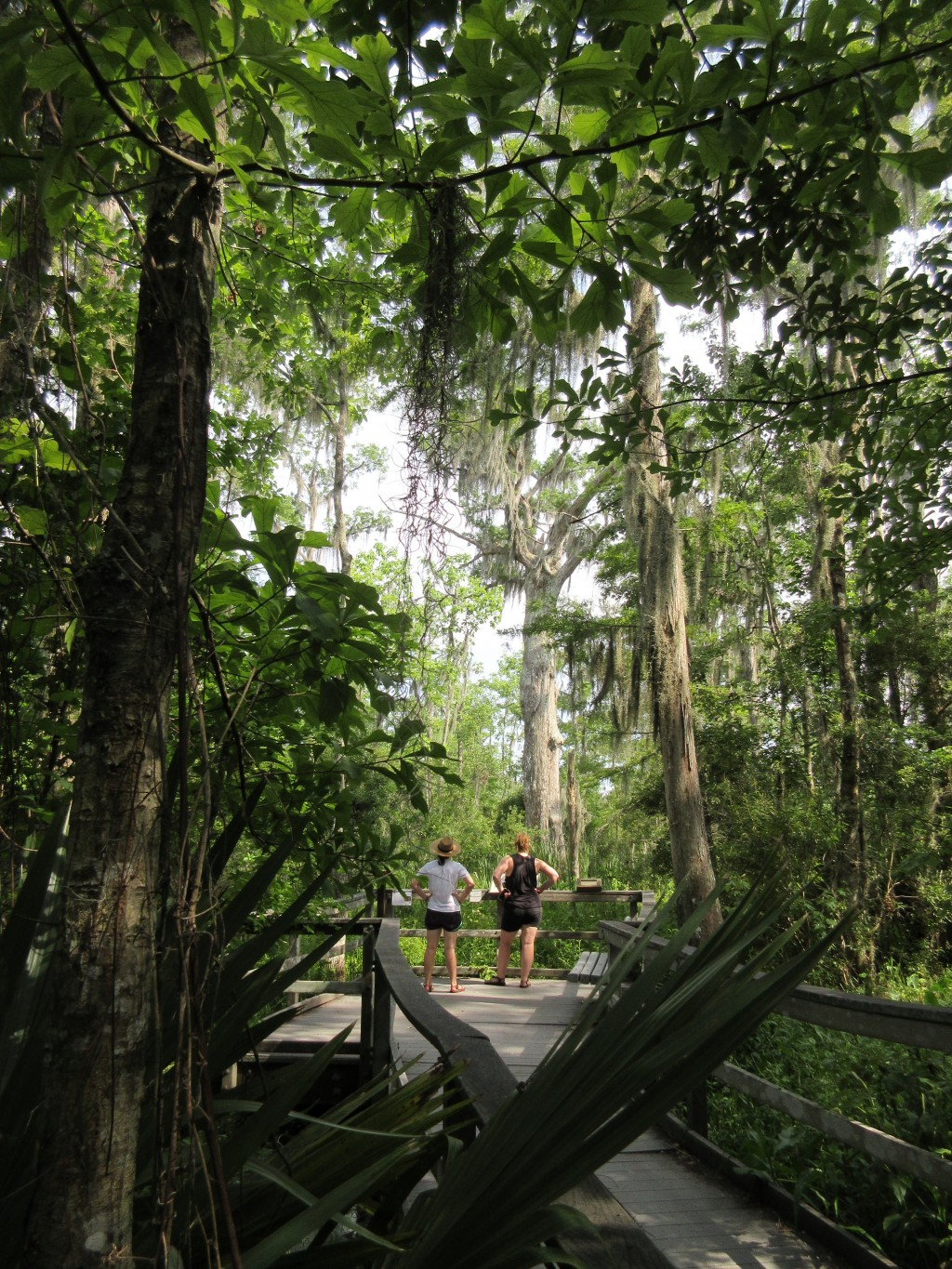 This June 3, 2018 photo shows visitors taking in the verdant landscape of woods and wetlands at the Barataria Preserve, part of Jean Lafitte National ...