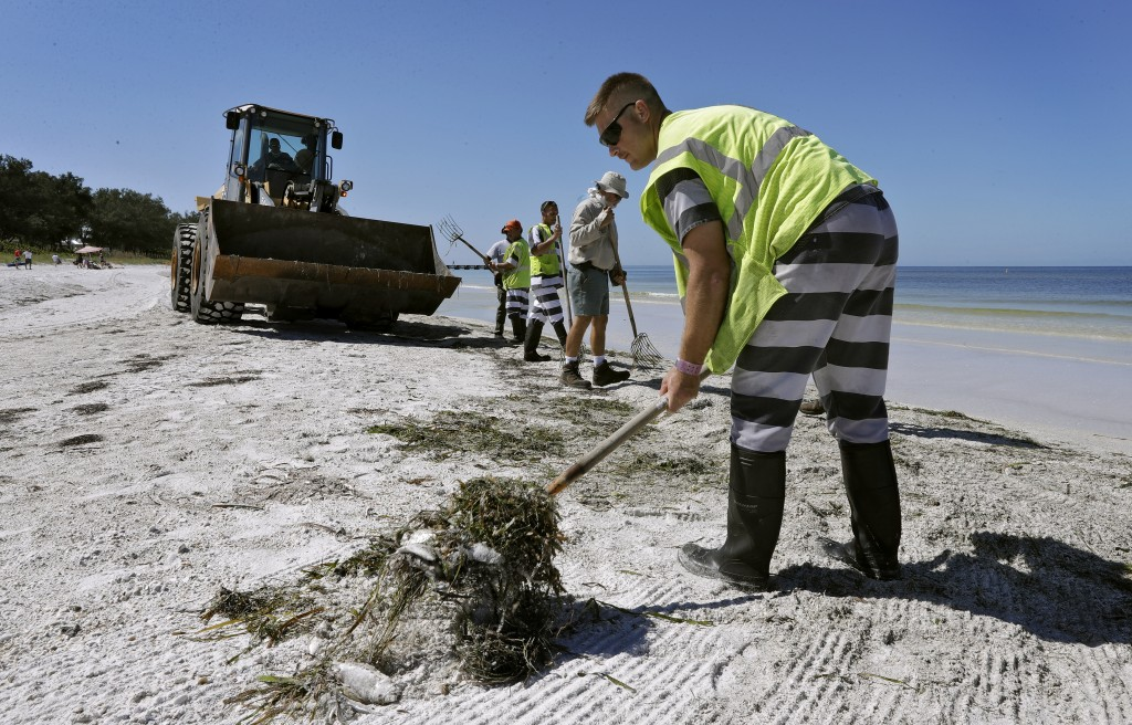 In this Monday Aug. 6, 2018 photo, work crews clean up dead fish along Coquina Beach in Bradenton Beach, Fla. From Naples in Southwest Florida, about ...